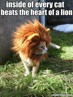 inside every cat beats the heart of a lion  http://cataddictsanonymouse.tumblr.com/post/17378812440 /