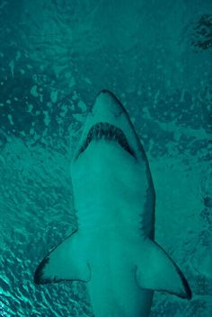 5982683ffe421 21 Best Shark Week images