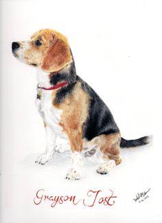 Beagle dog, color pencil