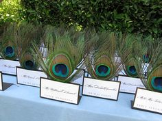 Peacock Feather Escort Card Display. Love this.