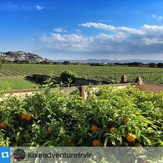 Vineyards stretching all the way to the sea at @collderoses. #incostabrava #aRoses . ........ Thanks for your visit @luxeadventuretrvlr @costabrava ! #visitroses