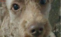 Após dois anos, cachorro e tutora se reencontram em Brasília