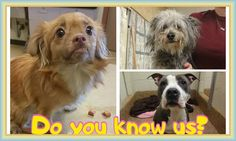 Close  Tag PhotoOptionsShareSendLike Photos from Thomas J. O'Connor Animal Control and Adoption Center's post in Mobile Uploads  Thomas J. O'Connor Animal Control and Adoption Center Page Liked · 1 hr ·   Hi, do you recognize these any of these female pups? They were all found in either Springfield, Holyoke, or Chicopee MA. If you know who any of these pups are, please contact the shelter right away. If you don't know them, will you please share their photos? Hopefully someone who does…