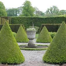 Imagini pentru topiary
