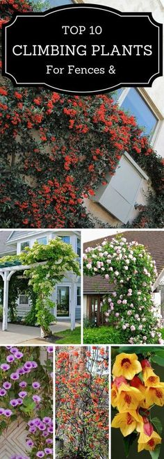 Spruce up your gardens or balconies with these climbing plants! Visit www.SueKrider.com for all of your real estate needs in Dallas.