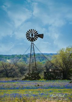 Near Floresville, Texas. Floresville Texas, Texas Pride, Farm Windmill, Wind Machine, Old Windmills, Texas Bluebonnets, Water Tower, Blue Bonnets, Old Farm