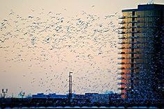 "Photo ""flockatsunset"" by toml721"