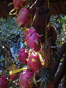 Pitaya - Wikipedia, the free encyclopedia