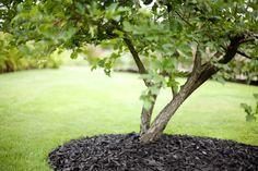 Kuvahaun tulos haulle koristekate musta
