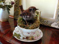 tea cup wren nest by Eve O'Neill