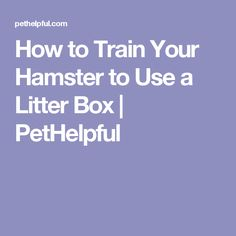 How to Train Your Hamster to Use a Litter Box | PetHelpful