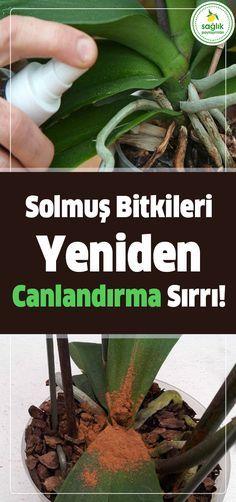 Solan Bitkilerinizi Yeniden Canlandıracak Tarçınlı Karışım #bitkiler #sağlık #şifa