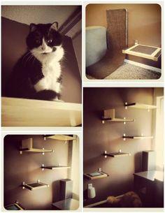64 best cat shelves images cat supplies cat wall shelves pets rh pinterest com