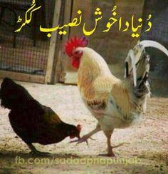 Funny Pakistani Photo