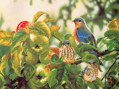 Peinture d' oiseaux
