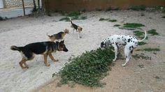 Juegos en el parque canino 04/16 Dama, Kiara, Manchita, Nela