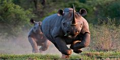 The 25 Most Dangerous Animals In The World