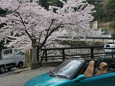 """The photograph of """"Sakura and my car"""" which the owner Lochan of Nepal-Jun Chiyabari Tea Estate photographed."""