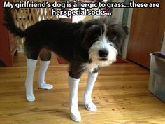 Socks for dogs... dogs dogs animals
