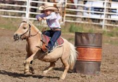 This is the cutest freaking thing I have ever seen!!!!!!! Little girl barrel racing miniature horse