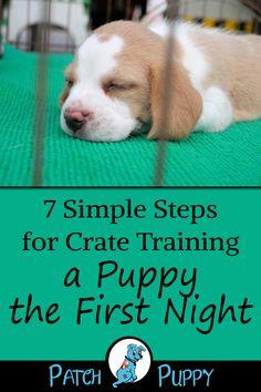 puppy training tips * puppy training . puppy training tips . puppy training tips potty . Puppy Schedule, Puppy Training Schedule, Training Your Puppy, Dog Training Tips, Training Classes, Training Pads, Dog Crate Training, Training Collar, Kennel Training A Puppy