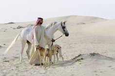 Der arabische Saluki | ..:: HalloDubai ! ::..                                                                                                                                                                                 Mehr
