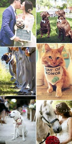 Wedding Pets: Gorgeous Photo Ideas For Your Album ❤ Many couples have favorite members of family, we mean dogs, cats or others. They want to include their wedding pets in their big day. See more: http://www.weddingforward.com/wedding-pets/ #wedding #pets