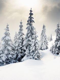 Winter Wonderland / 9267