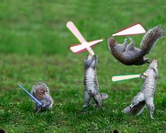 Jedi Squirrels... or Paw Wars
