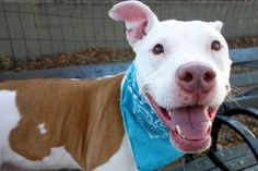 ZEUS - A1090648 - - Manhattan  Please Share:TO BE DESTROYED 10/03/16 A volunteer writes: Need a morning pick me up? Need a jogging partner? Can't take a nap in the afternoon but need a pick me up? Zeus is waiting to be your everything! Jumping up and down in his kennel as a 'pick me, pick me', he got my attention and he was my first walk of my day. Housetrained as advised by his former owner, going potty was his first priority and off we go. He's a g