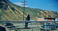 Las Flores Inn,Sea Lion,Malibu,California.