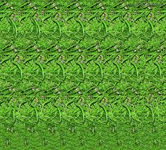 Grasshopper | 3D Stereograms - Brought to you by eyetricks.com.