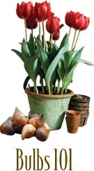 Bulbs, dig drop done!Getting started is easy. We'll show you how.