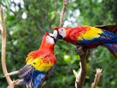 Cute love bird colorful parrot hd wallpaper