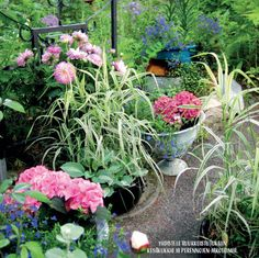 Summer flower pots, hydrangeas Image by: Romppala - Lindan pihalla - Linda Peltola