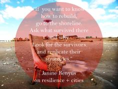 """""""If you want to know how to rebuild, go to the shoreline. Look for the survivors and replicate their strategies."""" ~ Janine Benyus on rebuilding post Superstorm Sandy. Resilient Cities. #NatureKnows"""