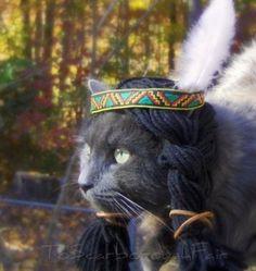 Cat's In Hat's