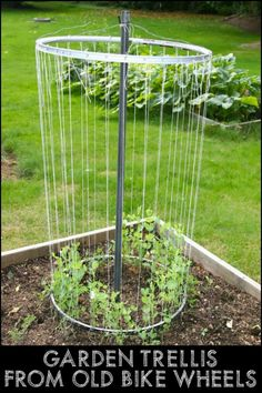 This DIY Garden Trellis Project Gives New Life to Unwanted Bicycle Wheels
