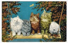 Antique Old Real Photo Cat Postcard Kittens [100610] - $5.69 :www.oldpostcardsintime.com  Online source for old and antique postcards