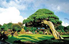 The Spirited Garden(Bonsai Garden) in Jeju Island, Korea.  spiritedgarden.com