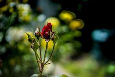 Flowers by Filipe Coelho on