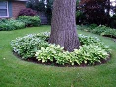 Flower beds appear amazing no matter which flower varieties you choose to include.Putting your flower beds around your trees would make your garden look. Landscaping Around Trees, Large Backyard Landscaping, Backyard Trees, Landscaping Tips, Mailbox Landscaping, Front Yard Planters, Landscape Design, Garden Design, Rock Garden Plants