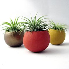 Air Plant Container Pods  - Autumn Colors // Planter // Home and Garden