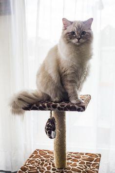Animals, Pets, Gatos, Animales, Animaux, Animal, Animais