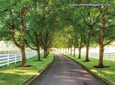 LHM Oregon/SW Washington - Road To French Country Estate #LuxuryHomes #Trees #Road
