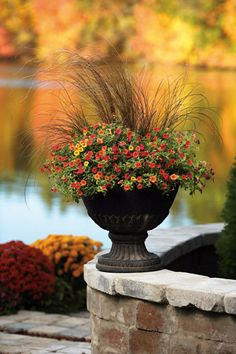Fall container?...Such a nice change than the typical mums.