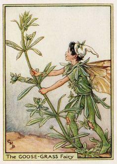 Goose-Grass Flower Fairy Vintage Print, c.1950 Cicely Mary Barker-boekillustratie plaat