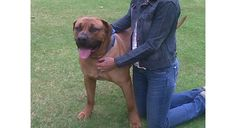 Animal and Pet Travel Agency - your trusted Pet Transport solution in South Africa . moving pets since Pet Transport, Pet Travel, Animals And Pets, Animal Pictures, Africa, Gallery, Pets, Roof Rack, Pet Pictures