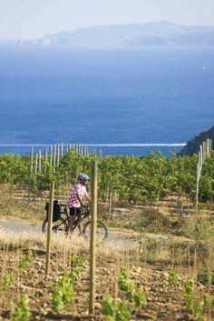 Vinyes vignes vines viñas Bici bike vélo  #aRoses #VisitRoses Roses Alt Empordà Empordà Catalunya Catalonia Costa Brava Turisme Tourism Leisure Holidays Vacations    #Enoturismo #Vine #Wine #Enoturisme www.visit.roses.cat