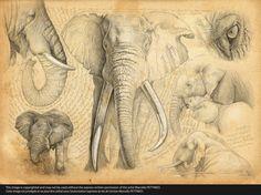 n°62-H-elephant                                                                                                                                                                                 Plus